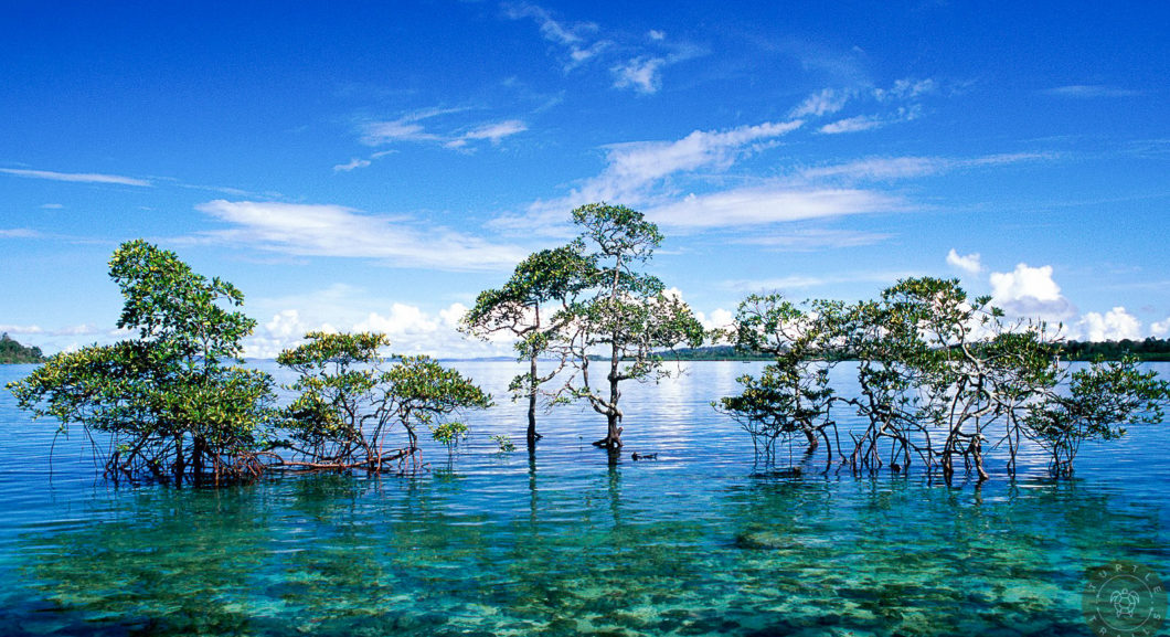 Paradise - Neil Island