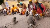 Sadhus feeding monkeys in a street of Rishikesh.http://www.claude-renault.fr