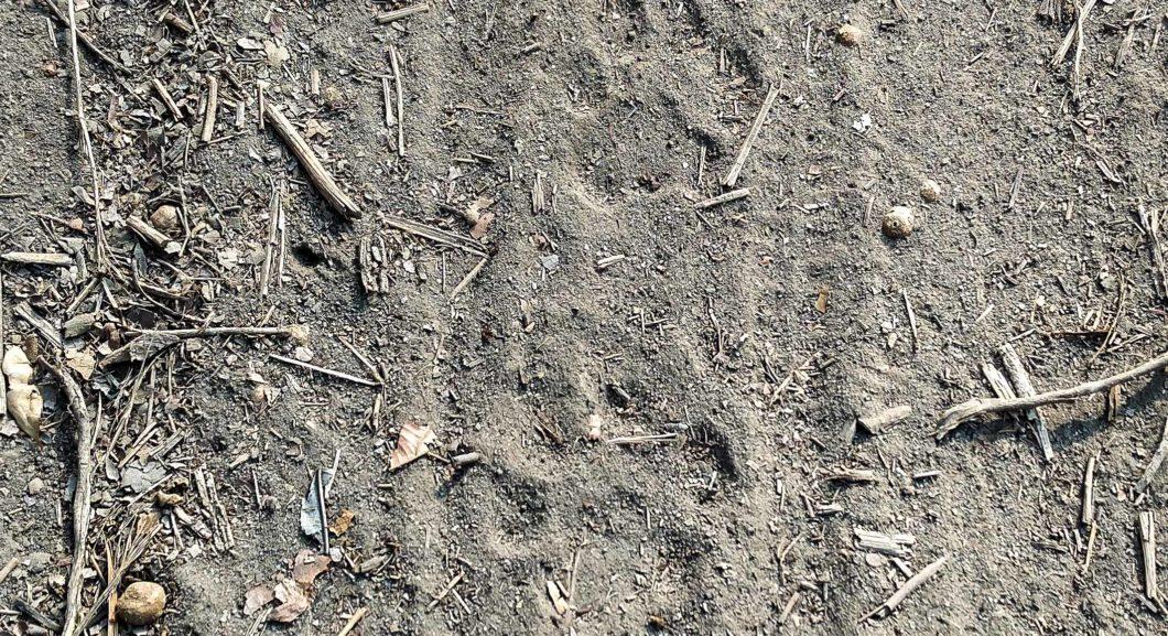 Tiger Pug Marks Corbett